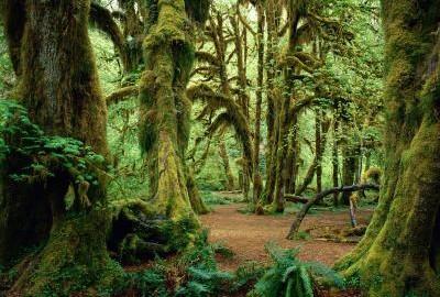 musgos-en-los-arboles-de-los-bosques-340_400x300